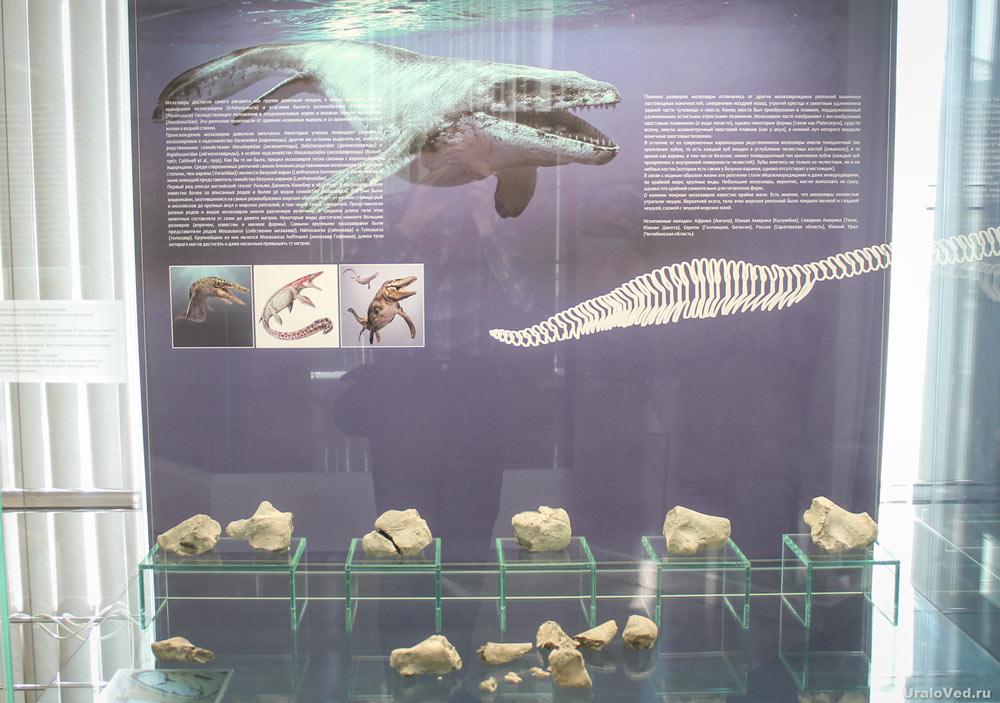 Экспозиция с фрагментами скелета мозазавра в музее Челябинска