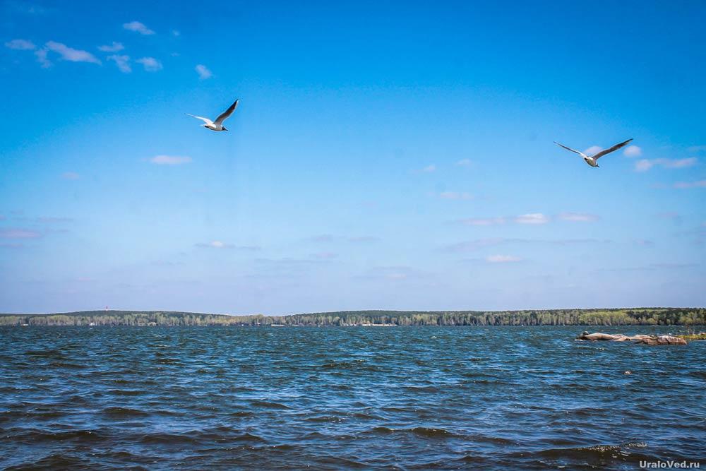 Чайки над Шарташом