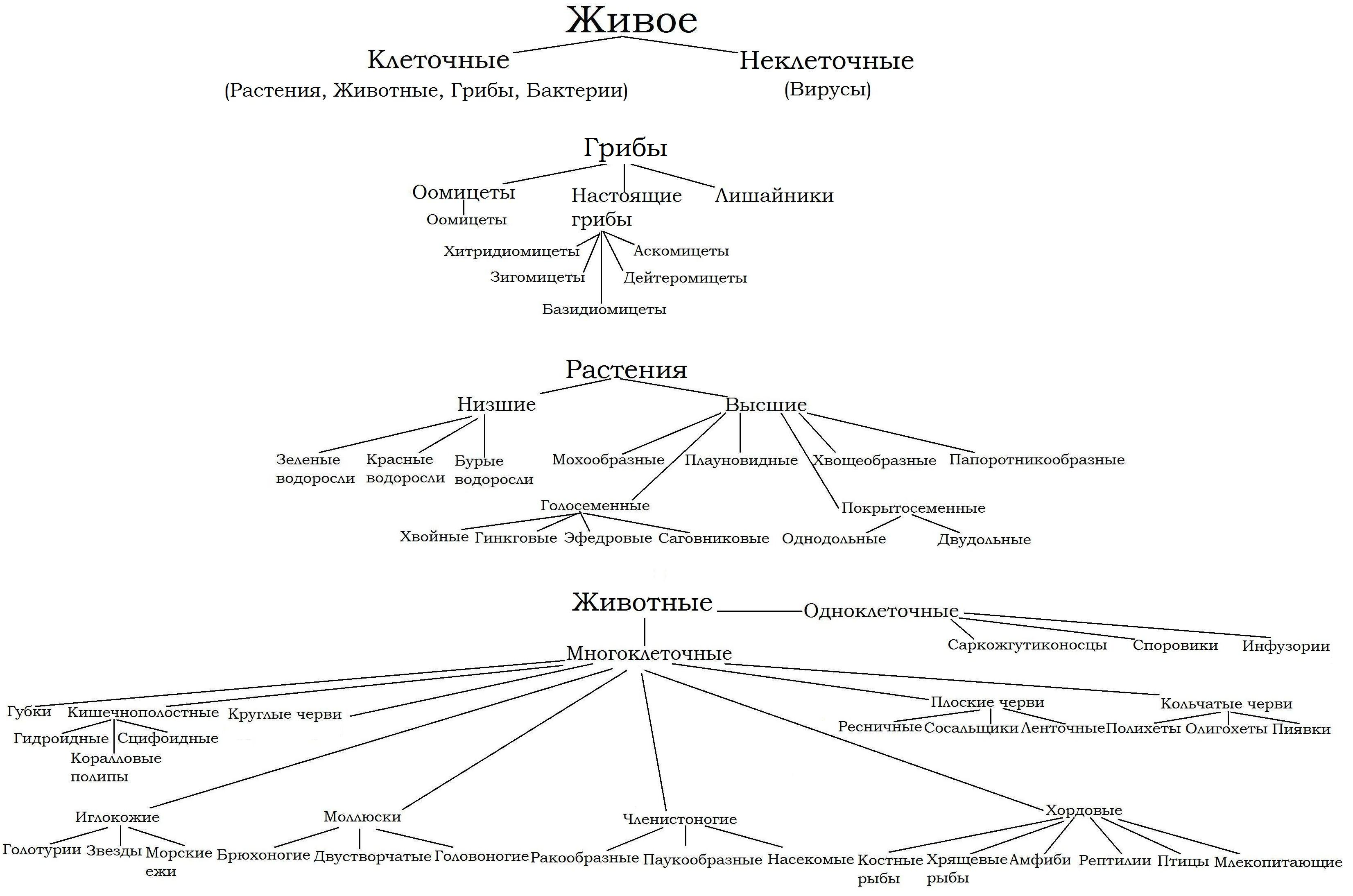 О биологической систематике Ураловед